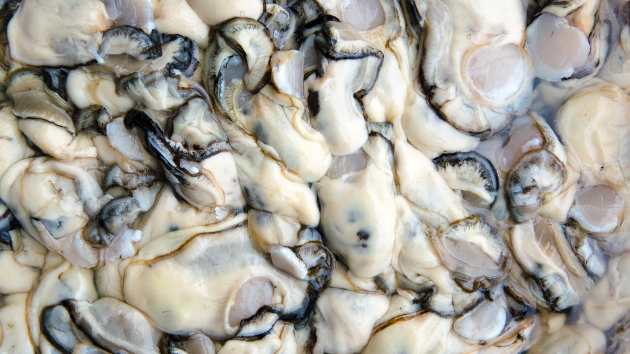 牡蠣の旬を徹底解説!お魚屋さんが教える本当に美味しい時期とは