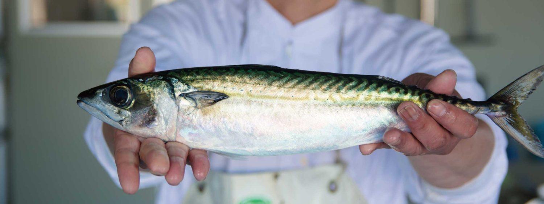 鮮度の良い魚の見分け方|プロが教えるコツ