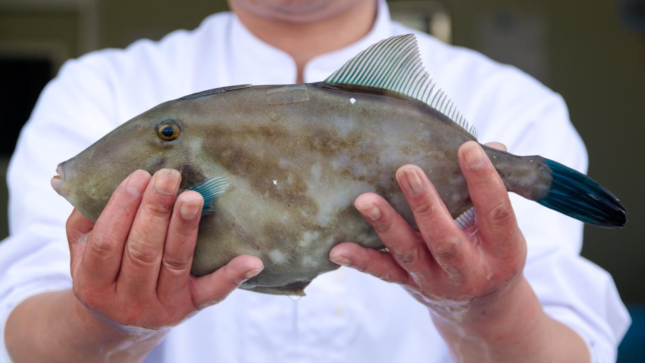 ウマヅラハギは旨い!カワハギとの違い・食べ方を魚屋が解説