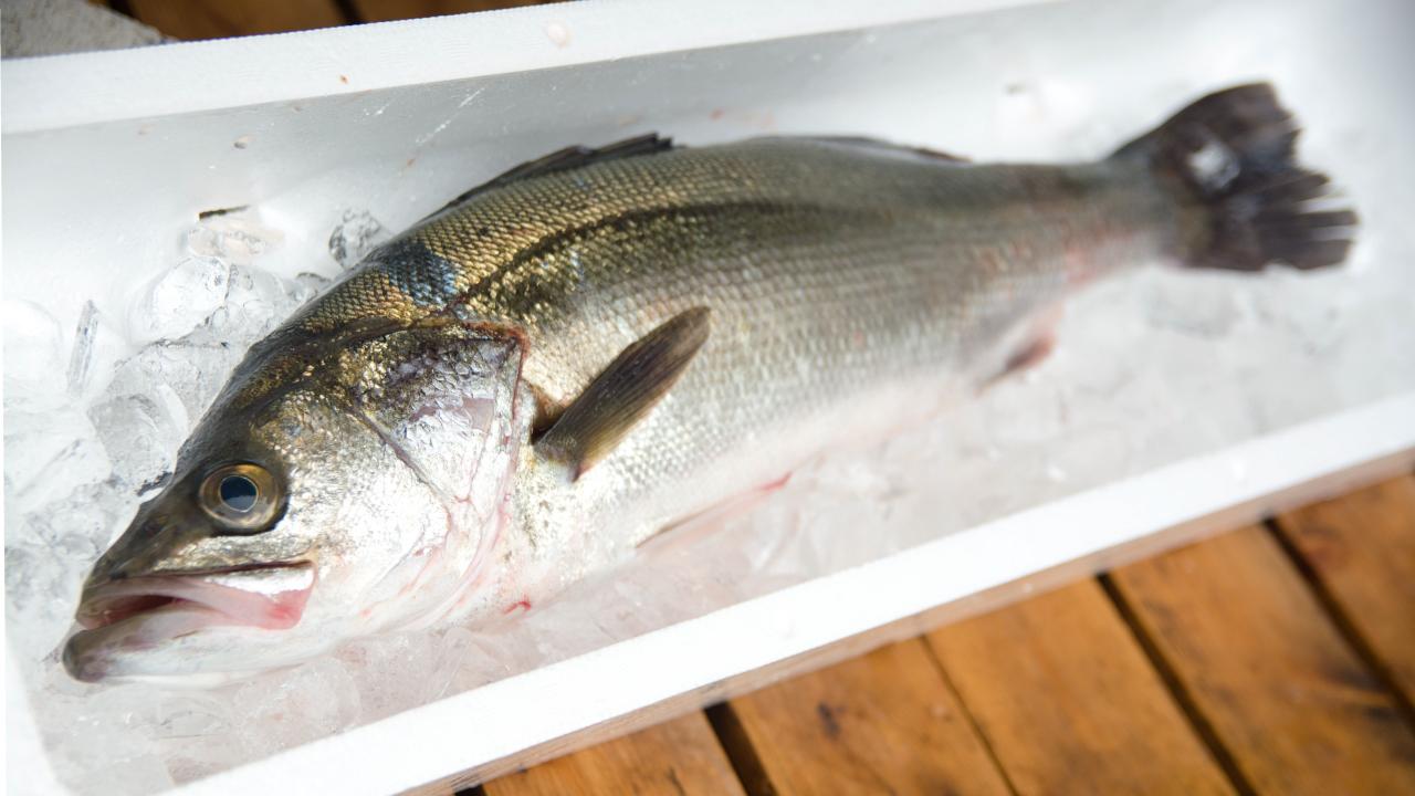 スズキというお魚!旬・値段・食べ方を魚屋がご紹介