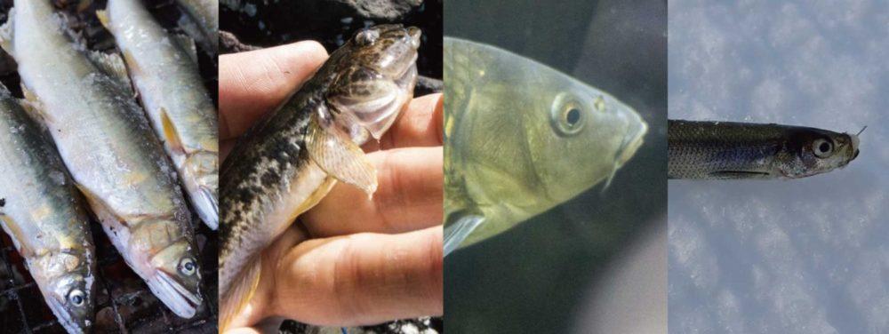 【ソボクなギモン】魚の寿命は何年?まさかの500歳越えも!