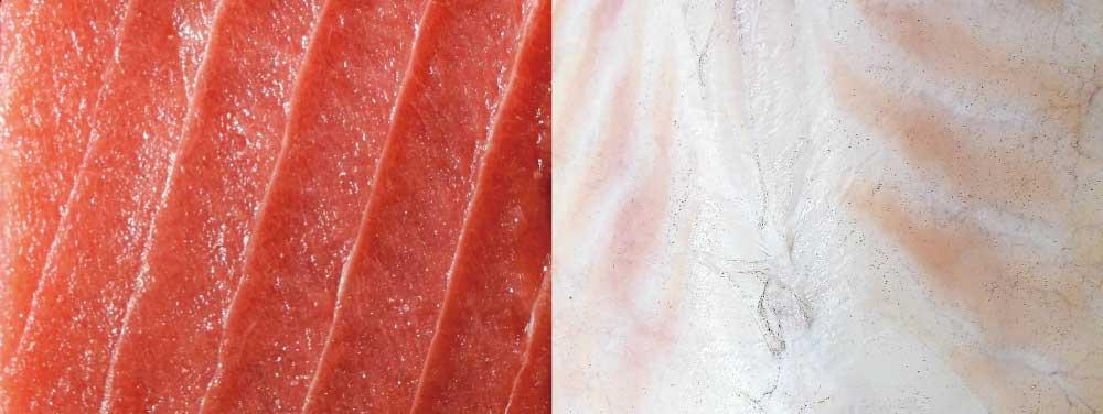 赤身魚と白身魚の違い!ブリやサケはどっち?人にも赤身と白身がある?